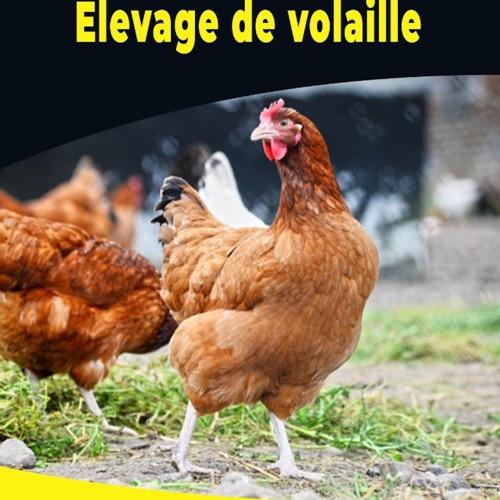 Réussir et rentabiliser votre production de poulets 🐓 de chair